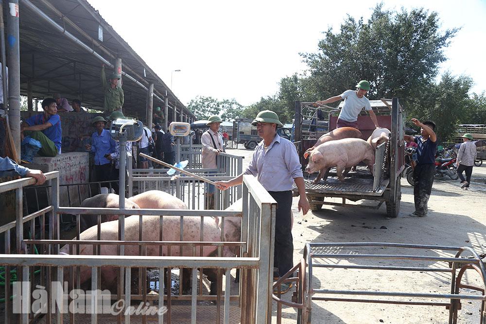 Lợn nhập khẩu từ Thái Lan chuẩn bị về chợ đầu mối Hà Nam