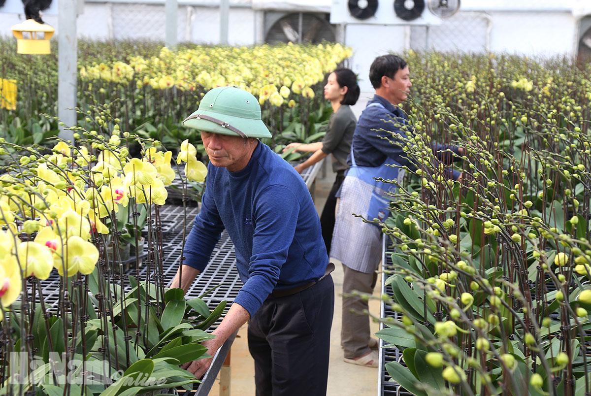 Hà Nam - Thúc đẩy phát triển sản xuất nông nghiệp ứng dụng công nghệ cao